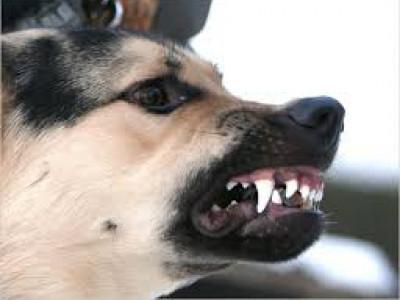 У Боратинській ОТГ відлвлюватимуть бездомних псів