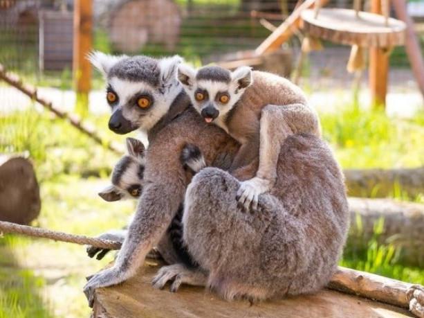 Луцький зоопарк робитиме знижки для жінок