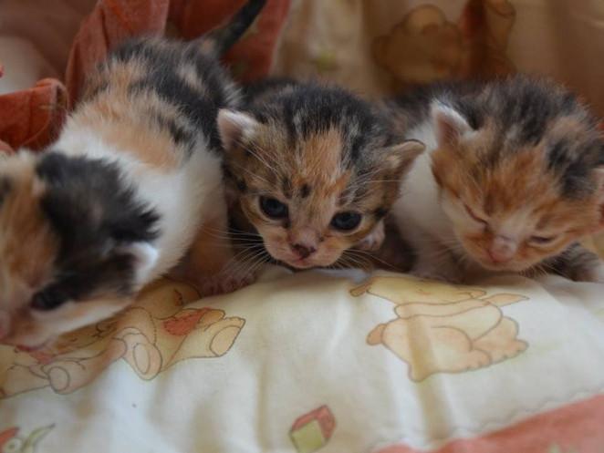 Кошенятам потрібна сім'я