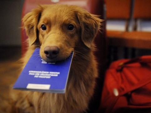 У луцькому ЦНАПі реєструватимуть тварин