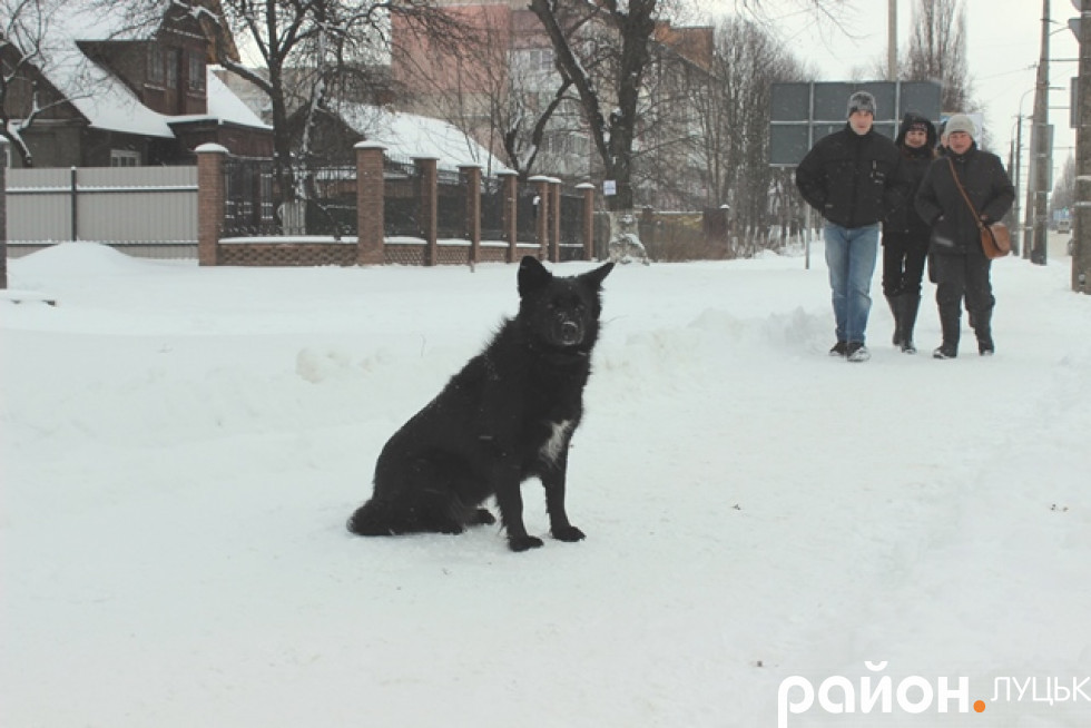 Навіть собаки потерпають від холоду