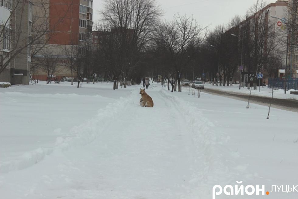 Вулиця Федорова