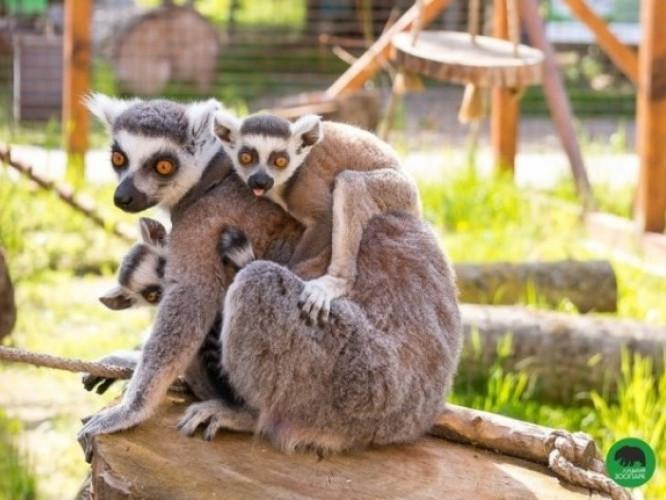 «Луцький зоопарк» у минулому році заробив 2 мільйони 50 тисяч
