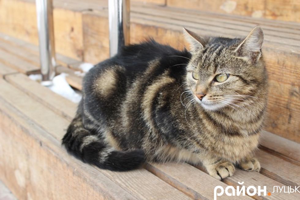 Кішка незворушно спостерігає за всім, що відбувається навколо