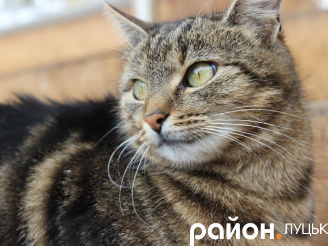 Кішка Маша