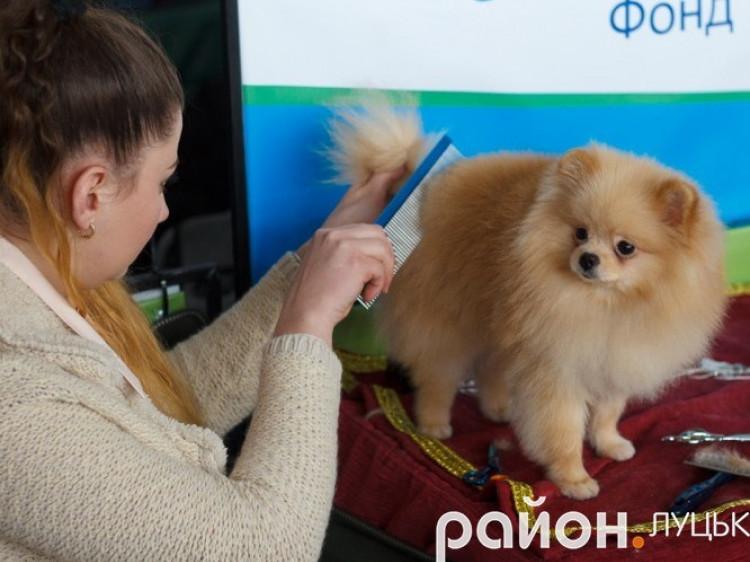 Щорічна виставка собак