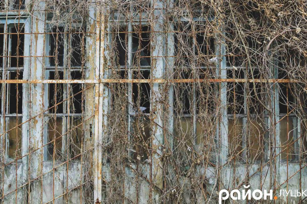«Родзинка» будинка – вікна, порослі плющем
