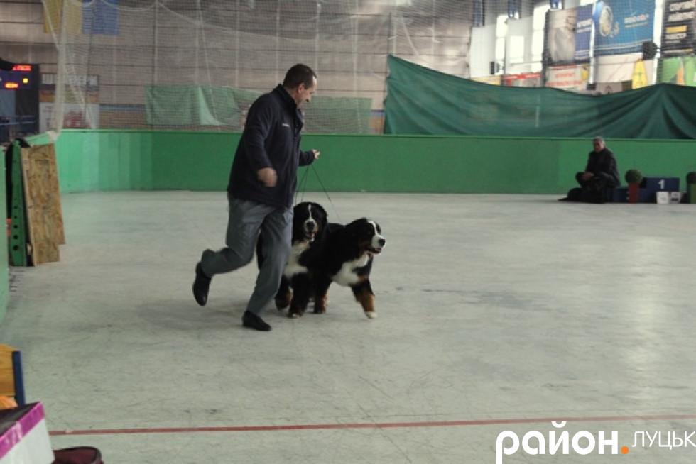 Демонтративний забіг із собаками