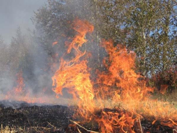 Загорілась суха трава