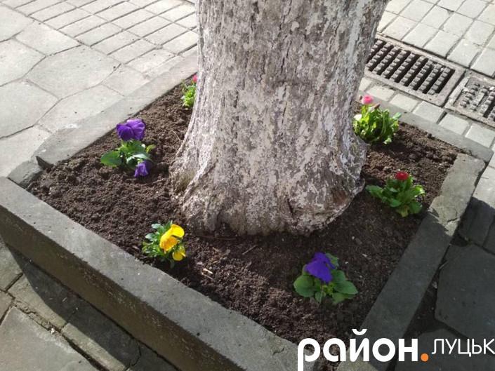 Ці квіти нещодавно вкрали