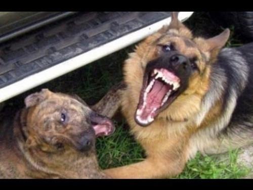 На Потебні гризуться бездомні собаки