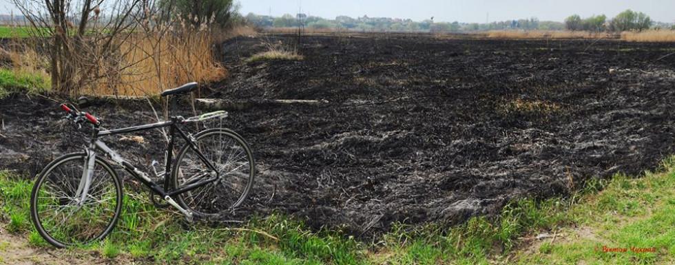 Згорілий заповідник «Гнідавське болото»