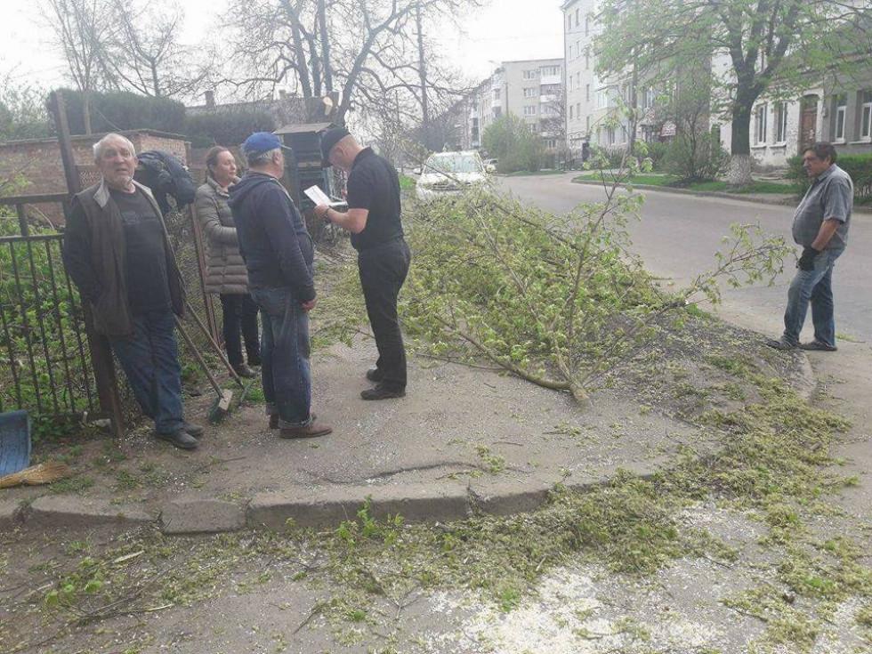 У Луцьку, на вулиці Коперника, 65, невідомі кронували дерева