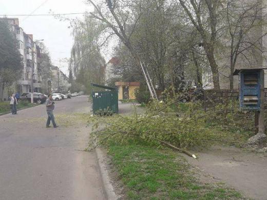 У Луцьку незаконно обрізали дерева