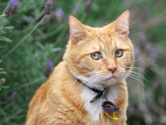 Котів і собак збивають необачні водії