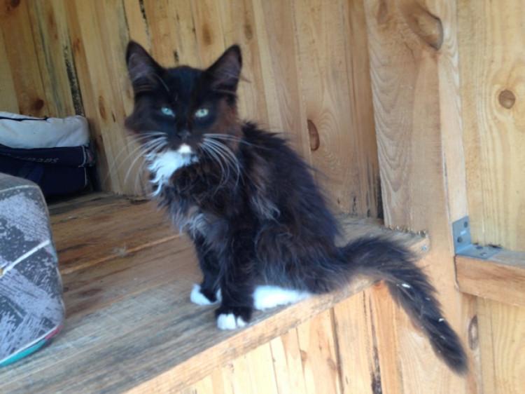Кіт з КП «Ласка»