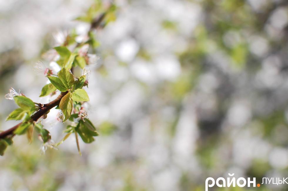 Листки чудо-дерева