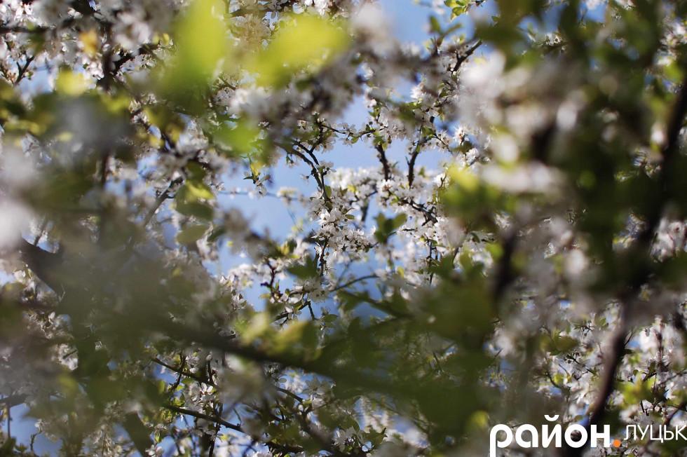«Стеля» так званого квіткового намету