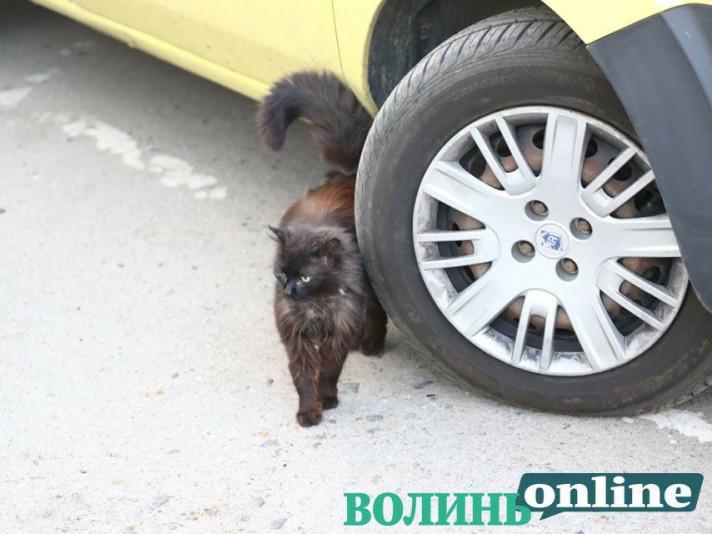 Загублена кішка