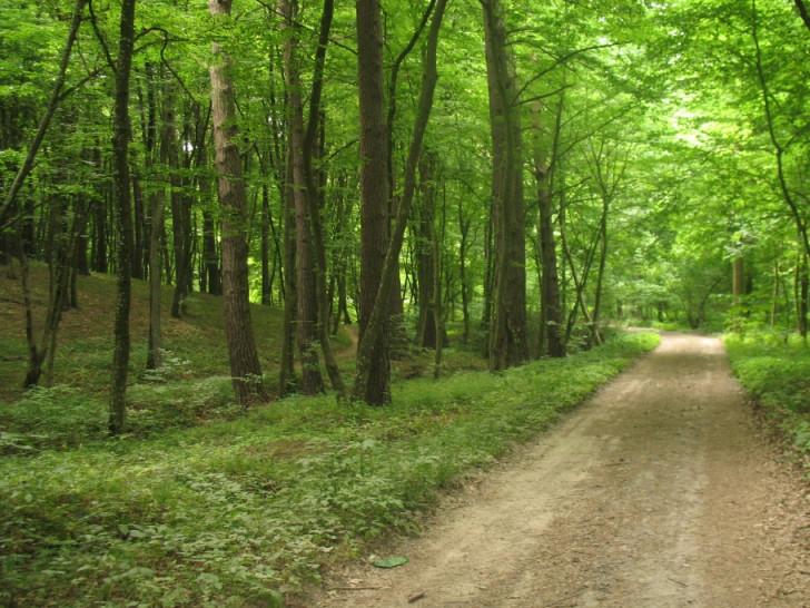 Воротнівське лісництво