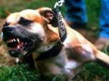 Собака породи боксер схопила за ногу перехожого