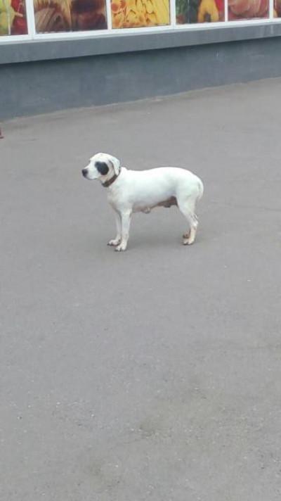 Фото загубленого собаки