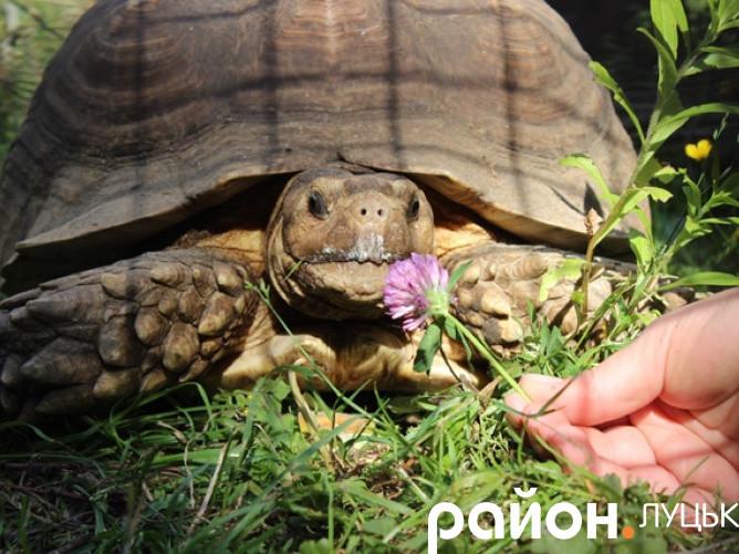 Черепахи у Луцькому зоопарку