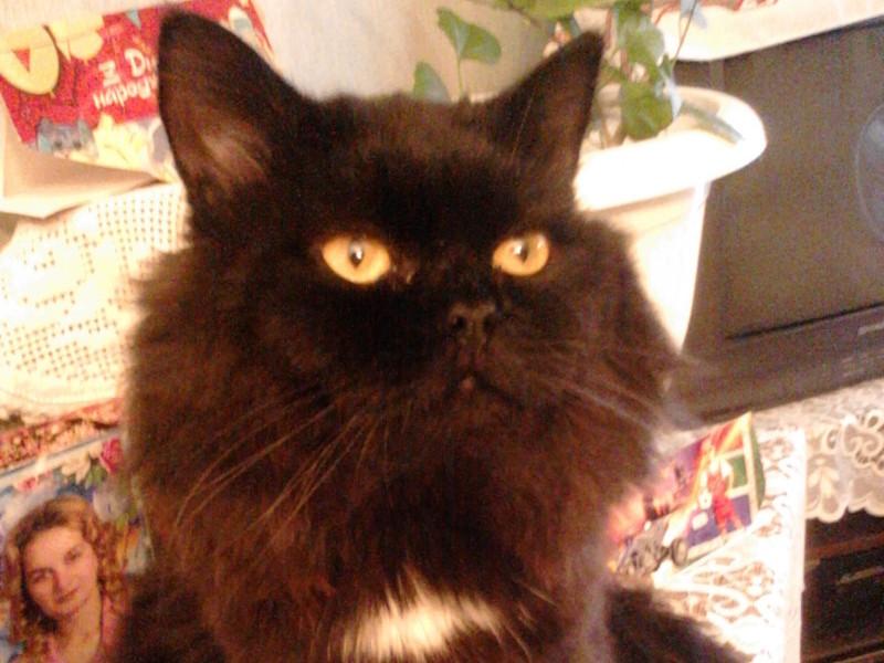 Загубився чорний кіт