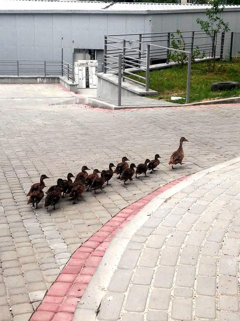 Птахи не бояться людей
