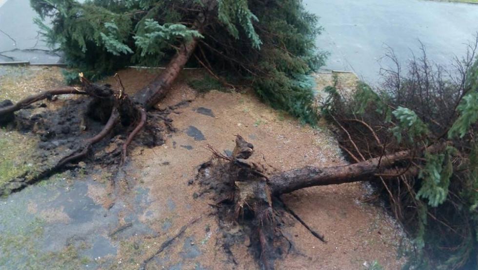 Знищені дерева