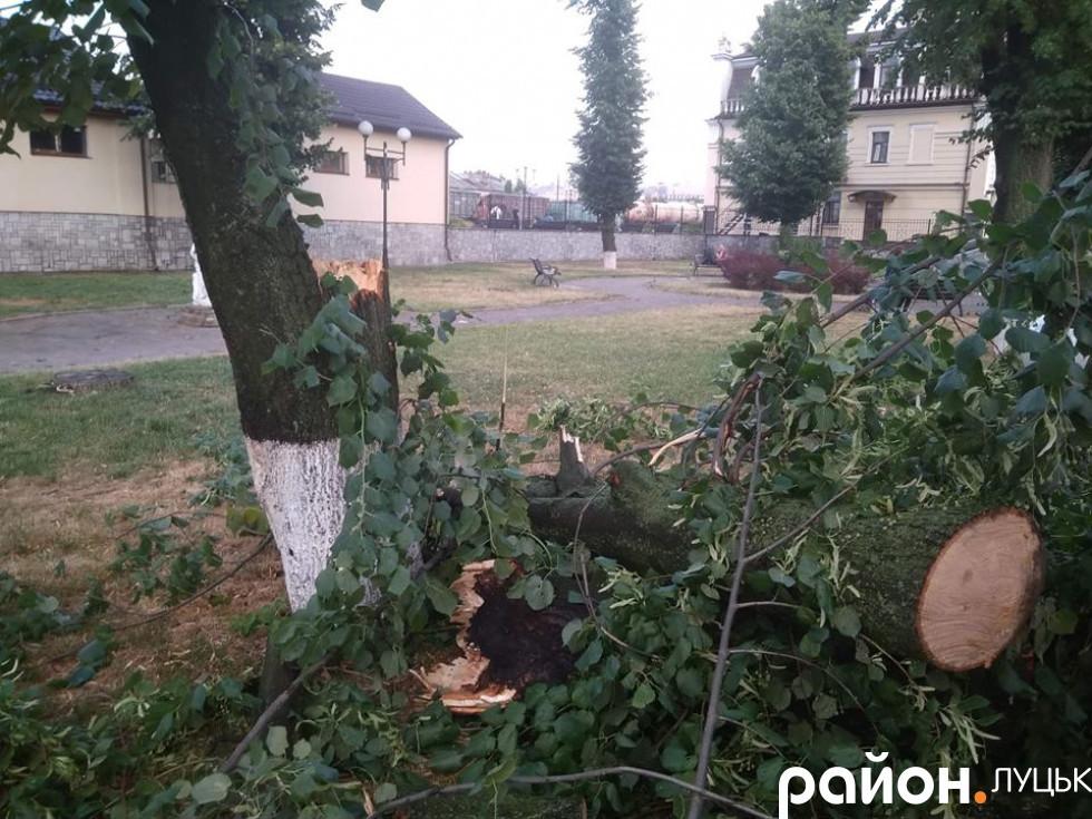 Повалені дерева