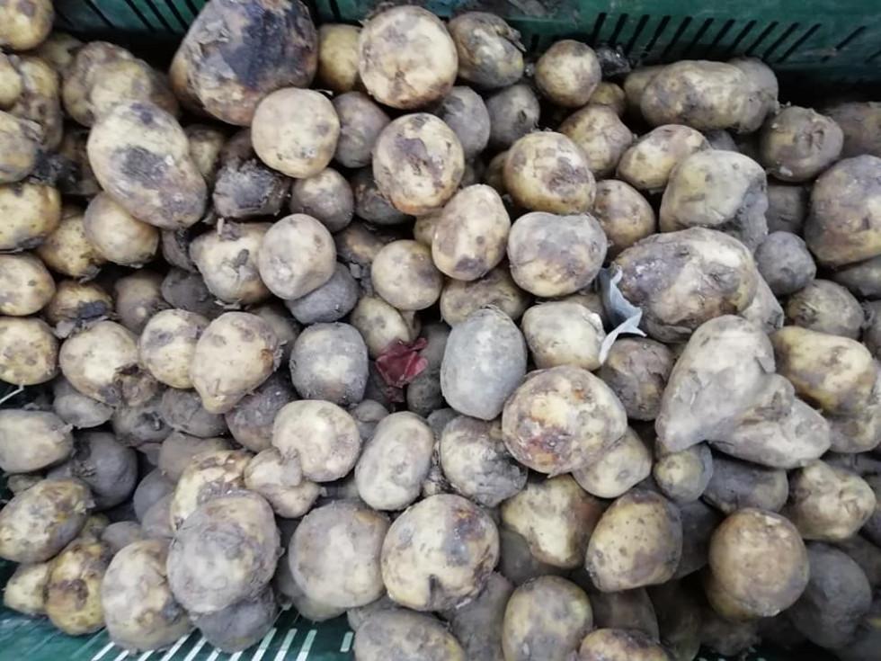 Гнила картопля