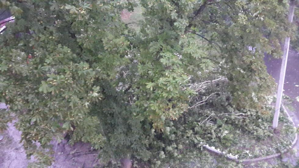 Дерева на СТепана Бандери