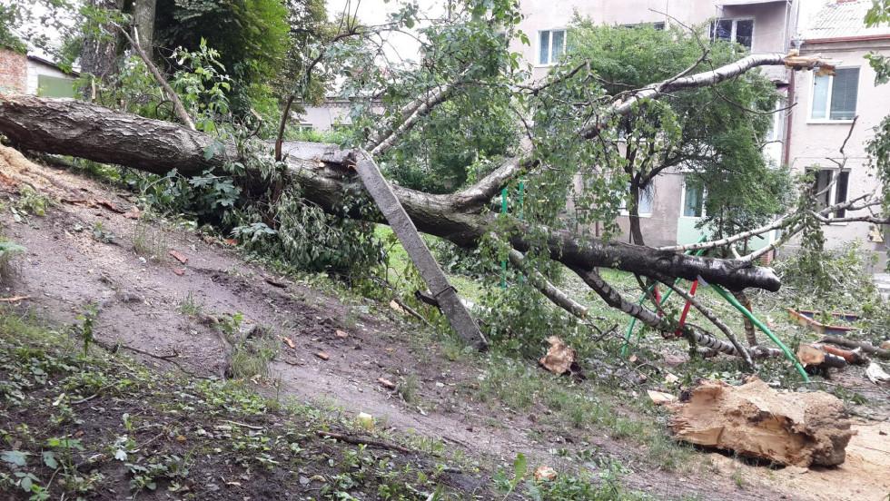 Негода повалила минулого року високе дерево