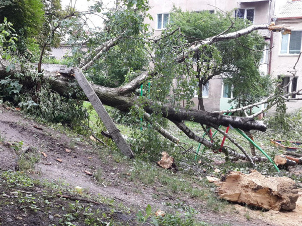 Високі дерева загрожують безпеці