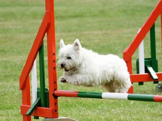 Для собак облаштують тренажери