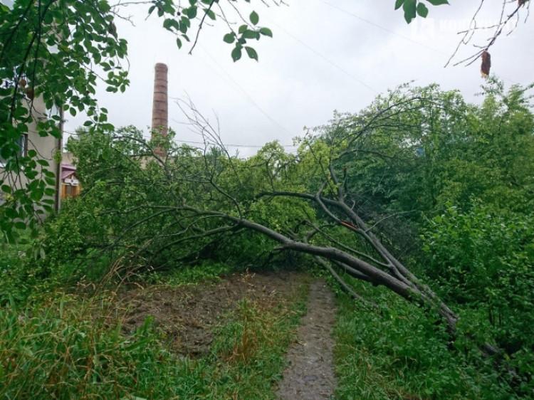Впало аличове дерево