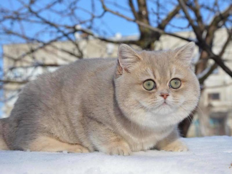 Просять повернути кішку за винагороду