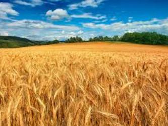 У Рокинях відбувся День поля