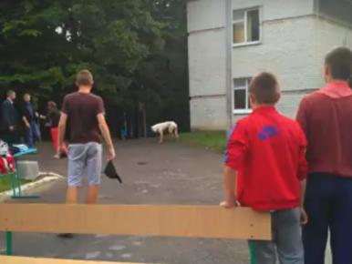 Закривавлений собака посеред дітей