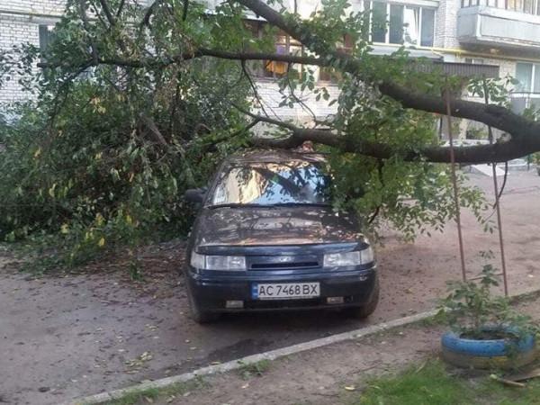 Дерево впало від сильного пориву вітру