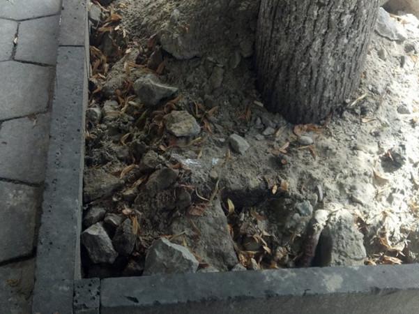 Будівельне сміття висипали під дерева