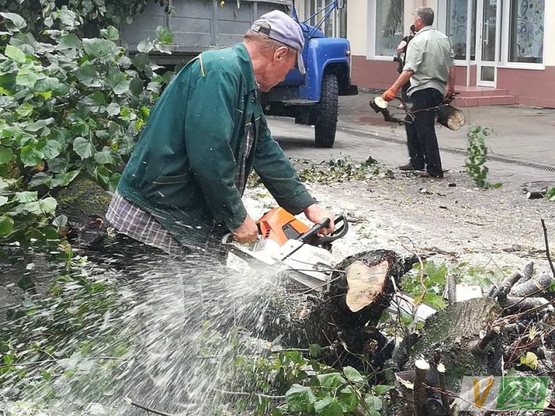 Комунальники прибрали липу на вулиці Лесі Українки