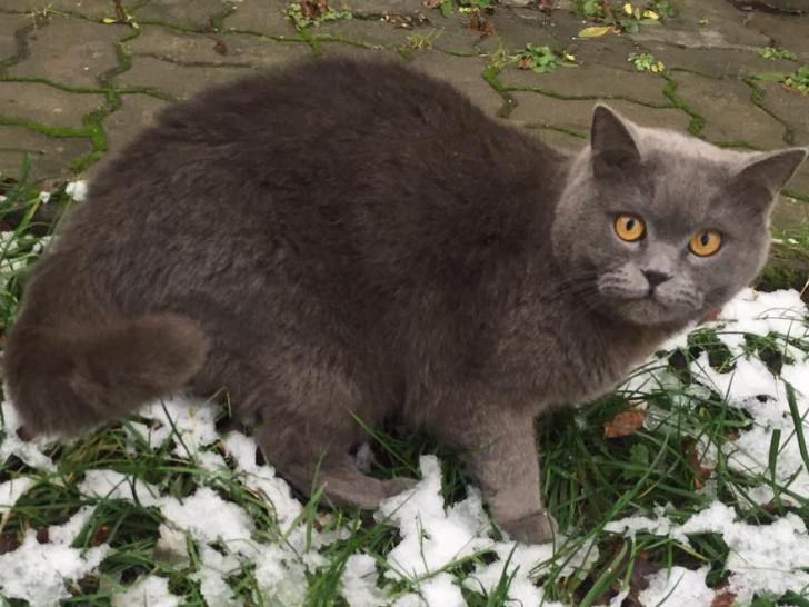 Кіт Любарт
