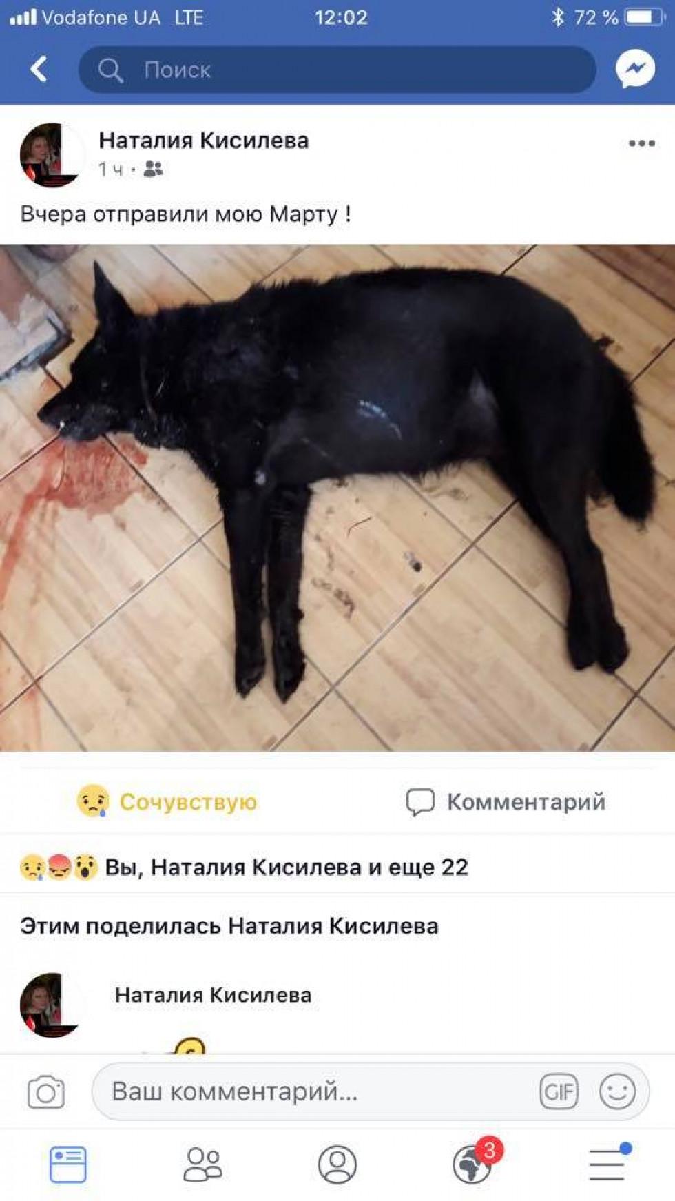 Допис про отруєну собаку Марту