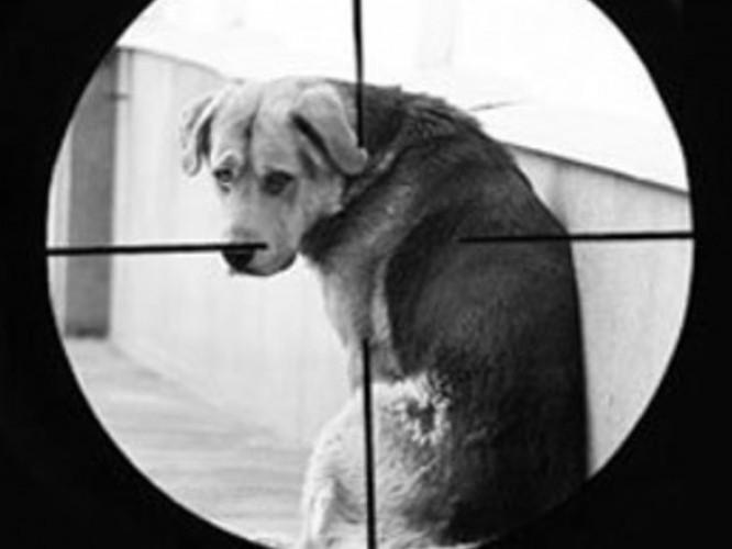 У Луцьку труять собак