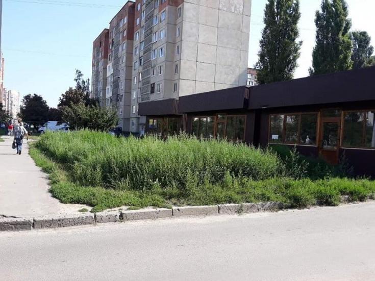 Бур'ян на Кравчука