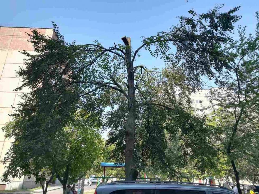 обрізані дерева в дворі будинку Кравчука, 5