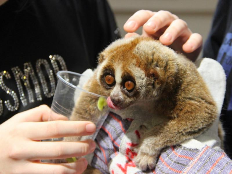Один з мешканців Луцького зоопарку