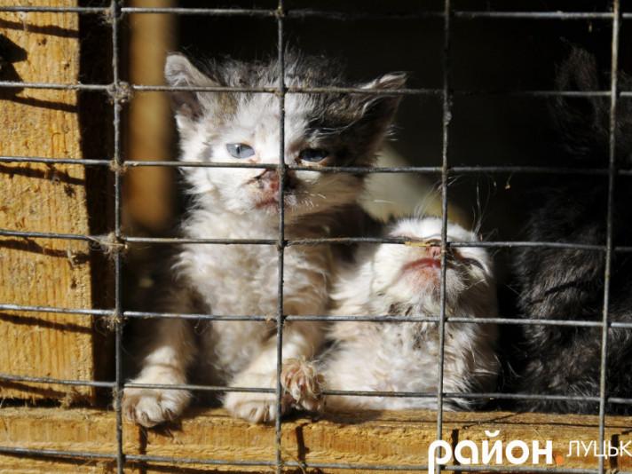 У Луцьку відбудеться марш за права тварин
